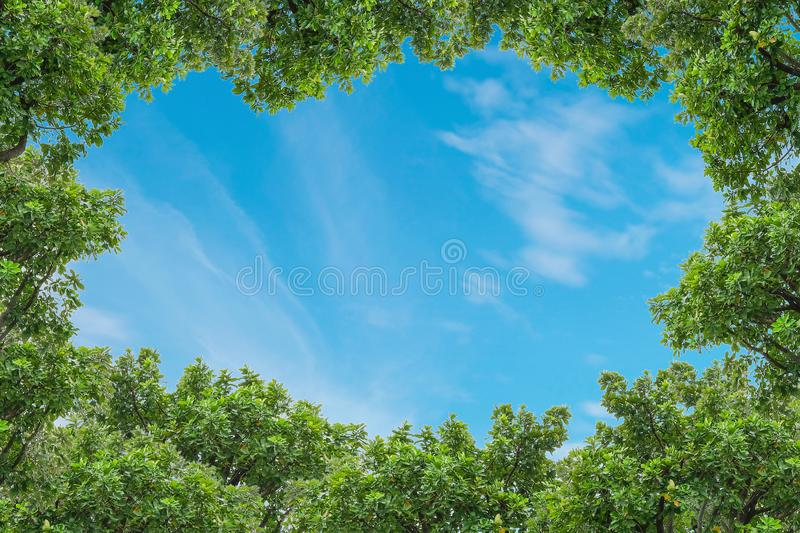Blue sky with thinly cloud with green tree background. Beautiful blue sky with thinly cloud with green tree background royalty free stock photography