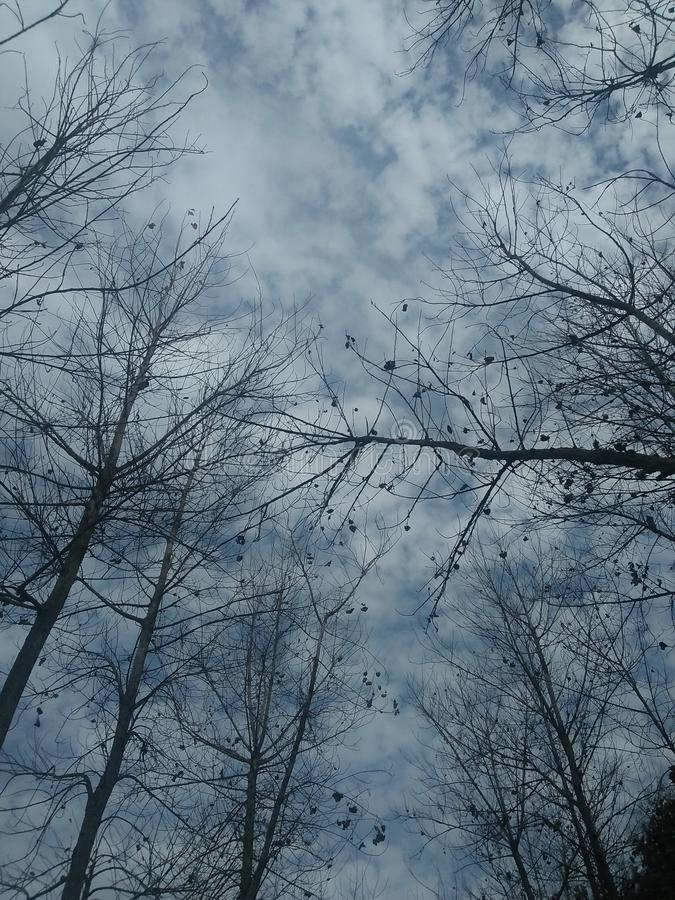 sky though tree canopy royalty free stock image