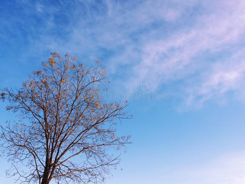 The blue sky royalty free stock images