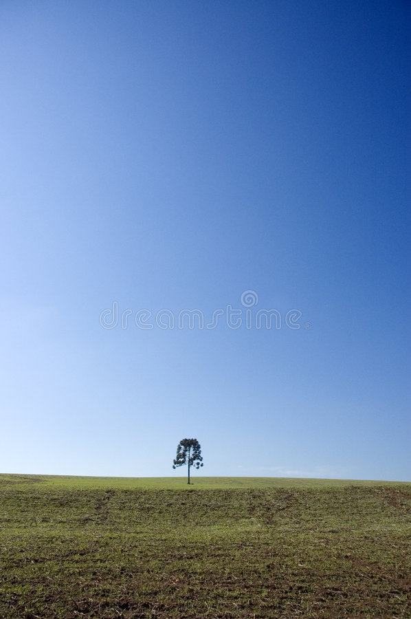 Download Blue sky with tree stock photo. Image of green, grass - 2969990