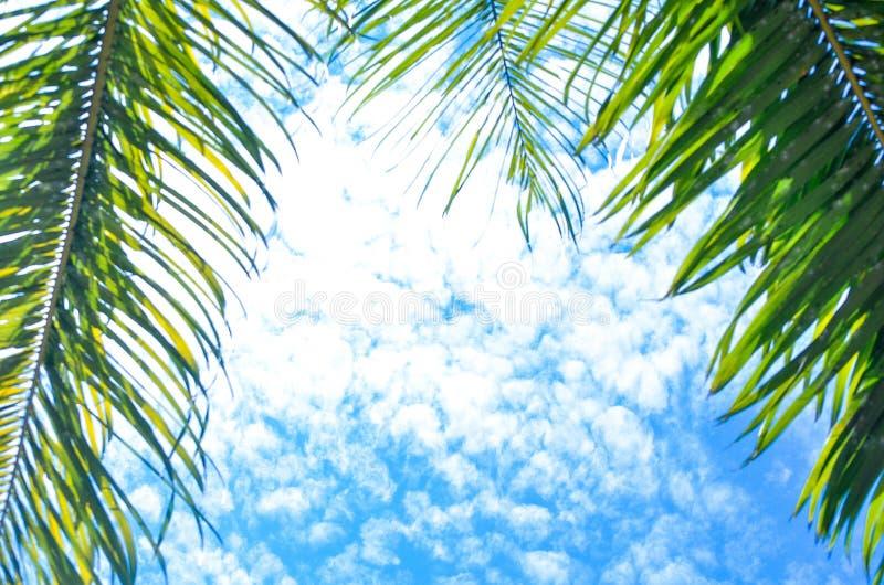 Blue, Sky, Tree, Branch stock image