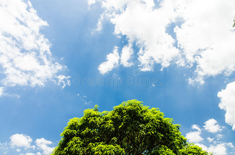 Blue sky with tree and cloudy royalty free stock photo