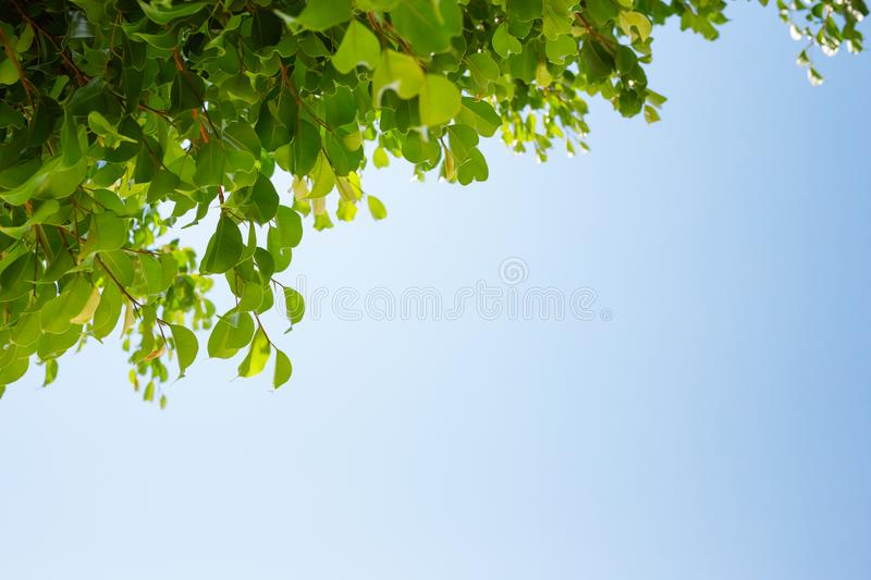 Blue sky and tree crown. Plants against sunlight royalty free stock image