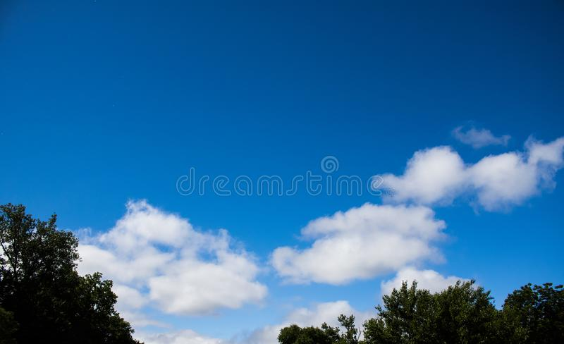 Blue sky with tree tops. Somewhat darkened tree tops against a beautiful blue sky with Cumulus clouds in the distance gradient sky from dark blue to almost white royalty free stock photos