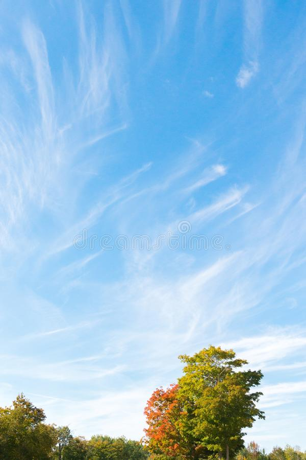 Blue sky, trees and white cirrus cloud background. Lanscape in fall royalty free stock photos