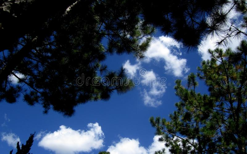 Blue sky through the treetops stock photography