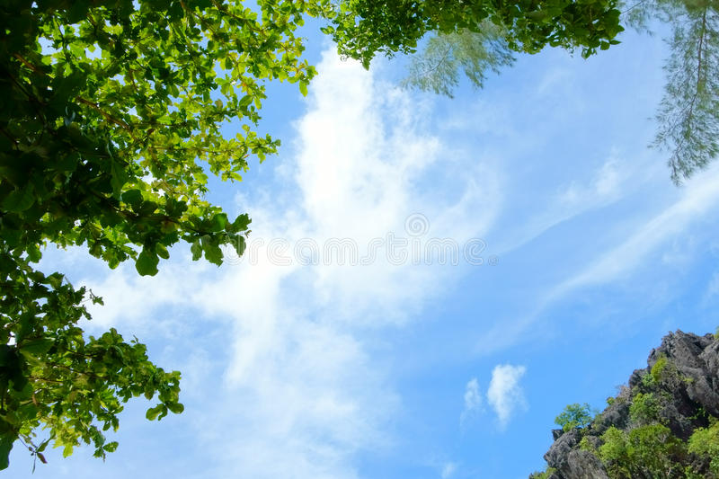 Blue Sky, White Cloud and Green Tree. Beautiful Nature Background stock images