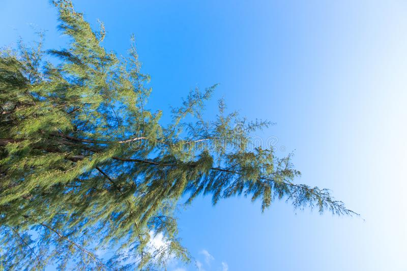 Nature Bright blue Sky with white clouds on blackground. Beautiful sky and clouds in the afternoon royalty free stock photos