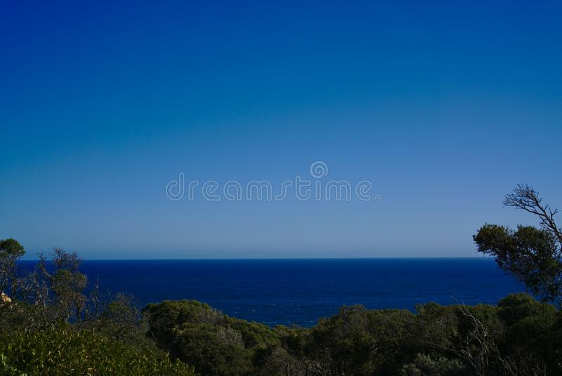 Blue sky, clean water and wild plants. Wild plants with clean water and blue sky with plenty of copy space royalty free stock image
