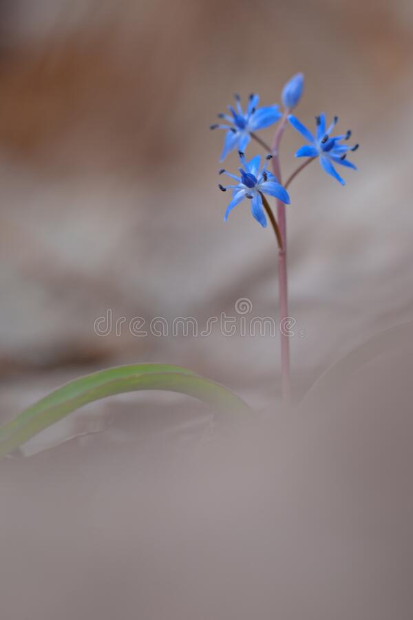 Blue Small Flowers In Bokeh Photography Free Public Domain Cc0 Image