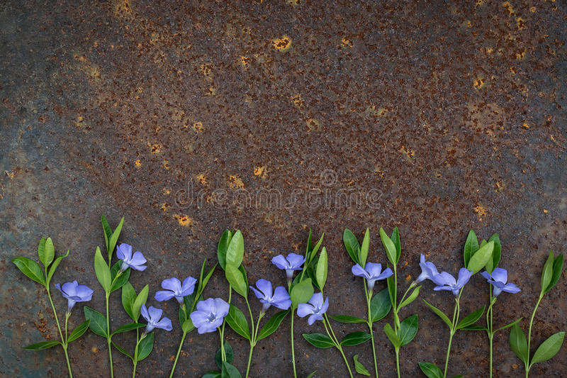 Blue small flowers on a rusty surface. Texture of rust stock photo