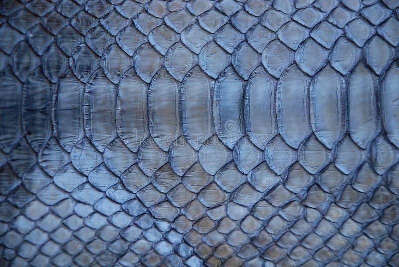 Blue snake skin. Photo of a blue snake skin stock photos