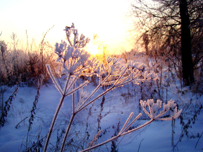 Lace parasols, covered with hoarfrost against the winter sunset. royalty free stock photos