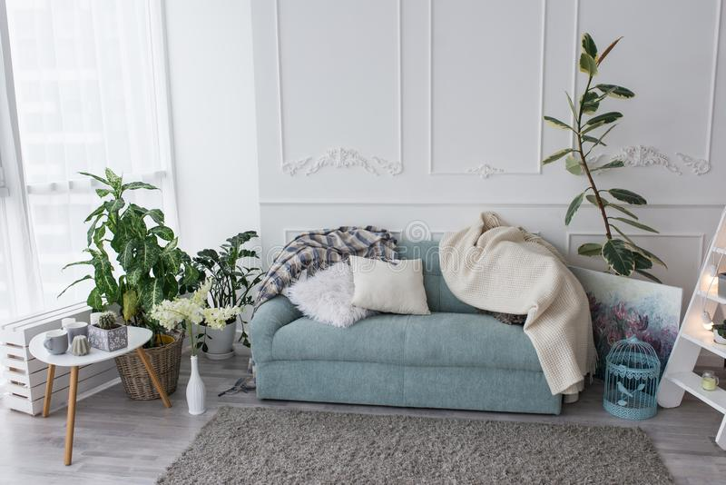 Blue sofa in the room. Few pillows and bedspreads lie on the couch in the living room, near a lot of greenery in the pots. Room royalty free stock image