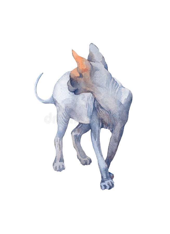 Blue Sphynx Cat with green eyes attentive walking and looking ba. Ck. Watercolor illustration on a white background stock illustration