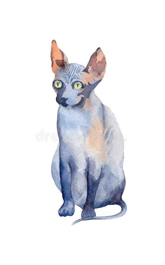 Blue Sphynx Cat with green eyes sitting and attentive looking. W. Atercolor illustration on a white background royalty free illustration