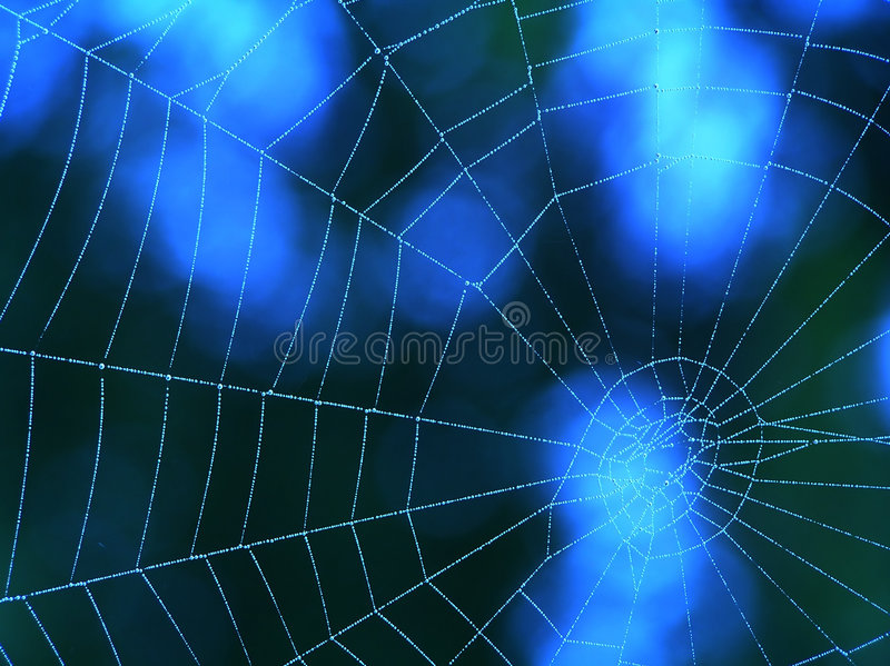 Blue spider web. – a background