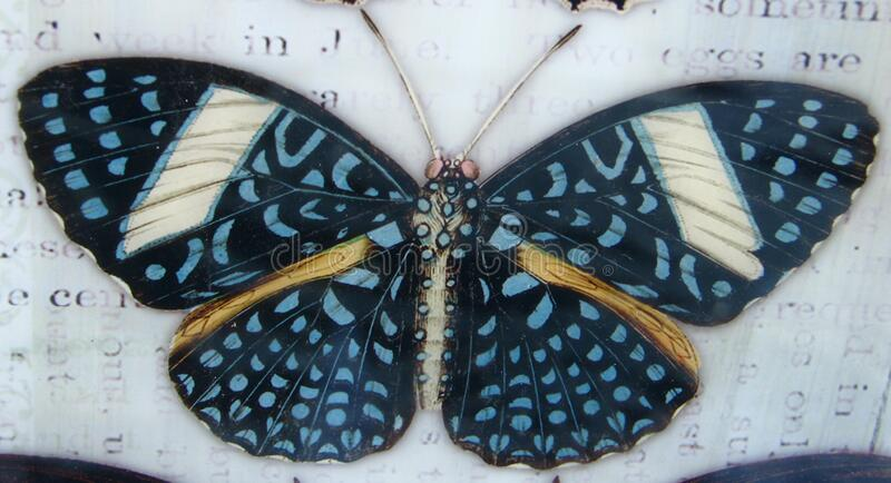 blue-spotted butterfly royalty free stock photos
