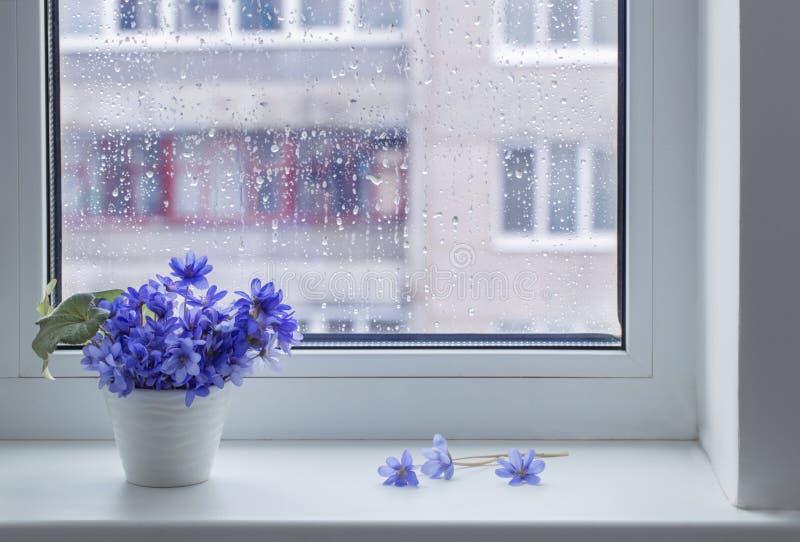 Blue spring flowers on windowsill. The blue spring flowers on windowsill royalty free stock images