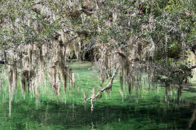 Blue Spring State Park, Florida, USA royalty free stock photo