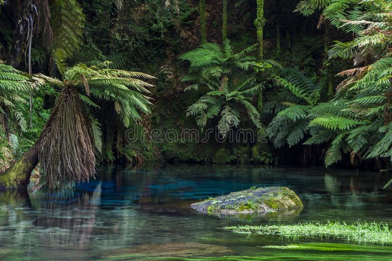 Blue Spring, stunning blue pool stock images