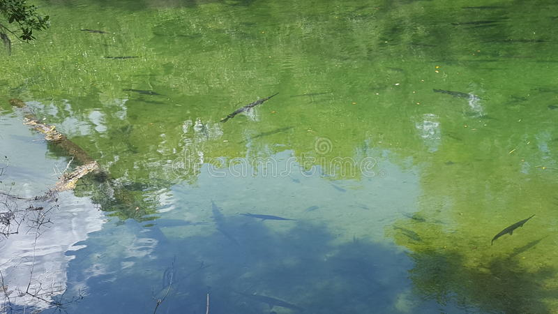 Blue Springs royalty free stock photo