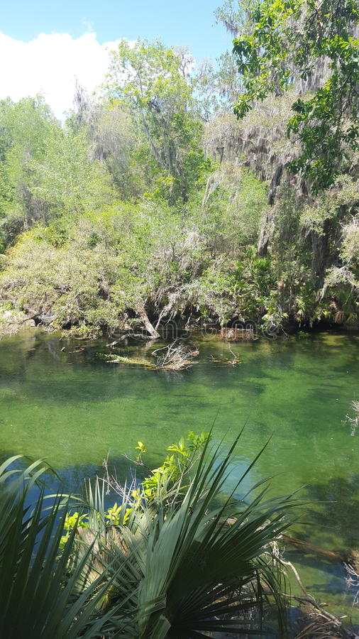 Blue Springs royalty free stock photography
