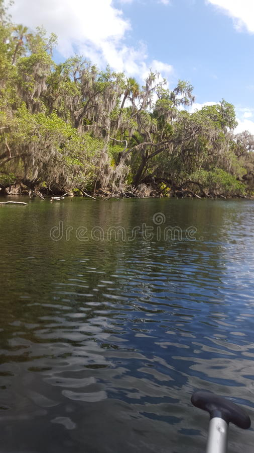 Blue Springs royalty free stock image