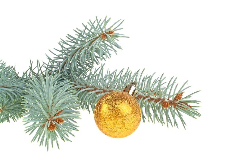 Blue spruce twig and christmas ball, isolated on white background stock photo