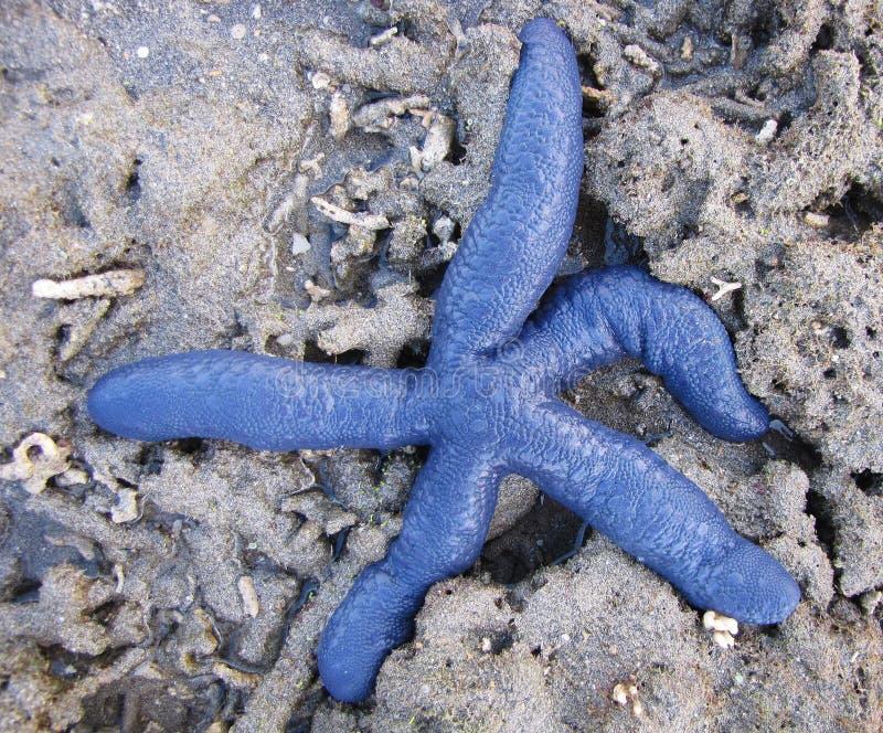 Download Blue Starfish 2 stock photo. Image of aman, travel, rocks - 18962808