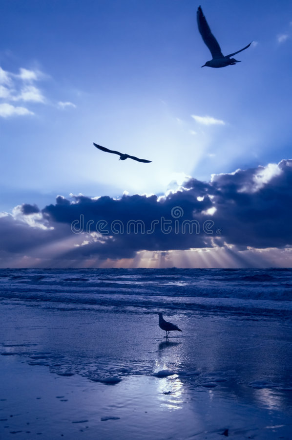 Download Blue Sunset Stock Photo - Image: 802840