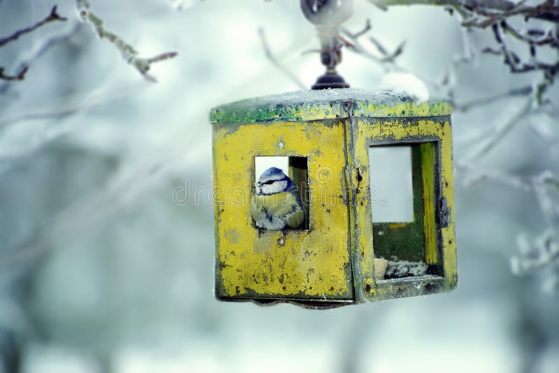 Download Blue tit in bird table stock photo. Image of snow, freeze - 7792864