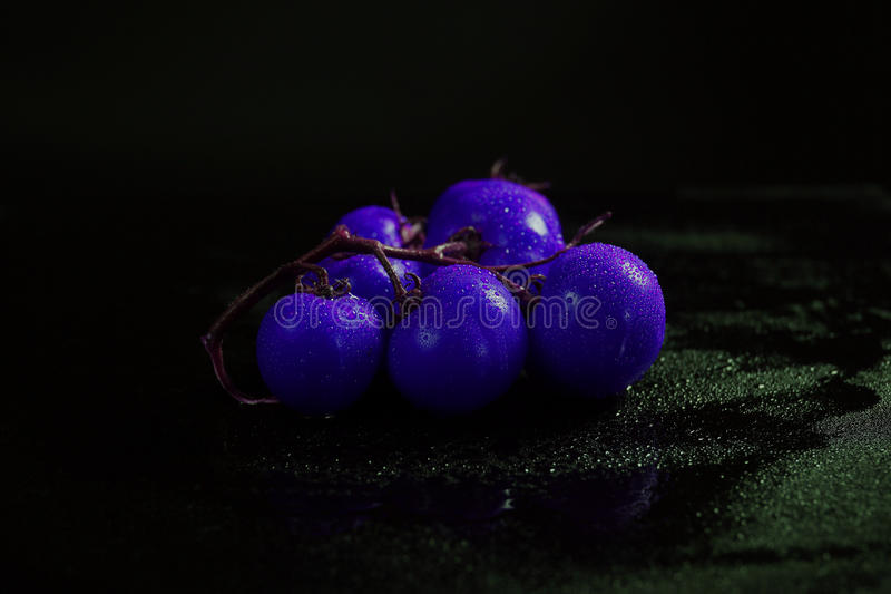Blue tomato. Es under water drops, black background stock image