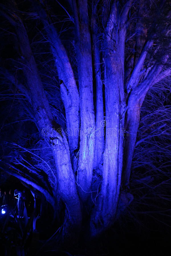 Blue tree of the night in Canberra stock images