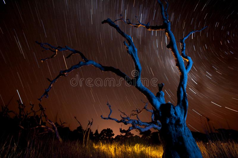 Blue tree, orange sky, star trails. A blue tree in front of the southern night sky, long exposure star trails stock photography