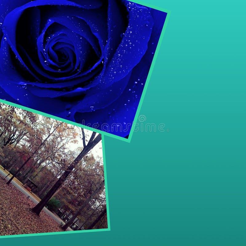 Blue tress stock photography