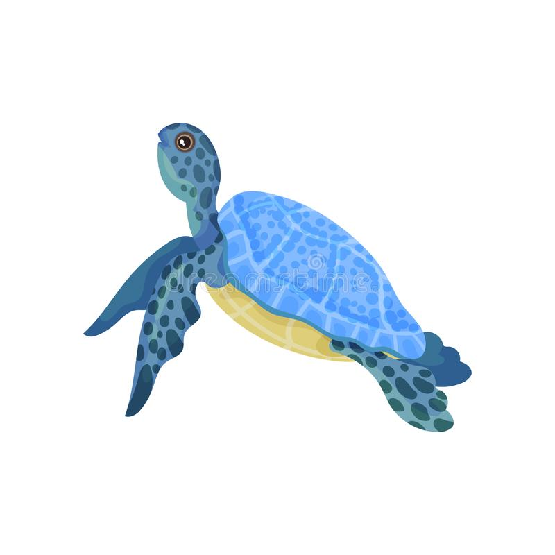 Turtle with light blue armor. Vector illustration on white background. Blue turtle with light blue armor and yellow belly. Vector illustration on white stock illustration