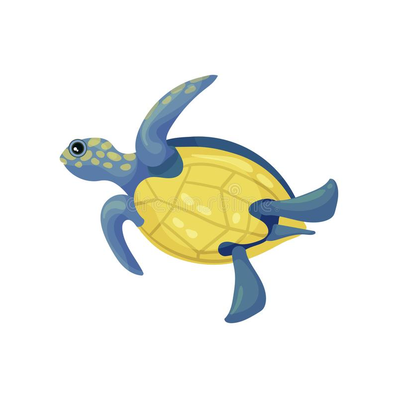 Blue turtle with a yellow belly and spots. Vector illustration on white background. Blue turtle with a yellow belly and spots on the head. Bottom view. Vector vector illustration