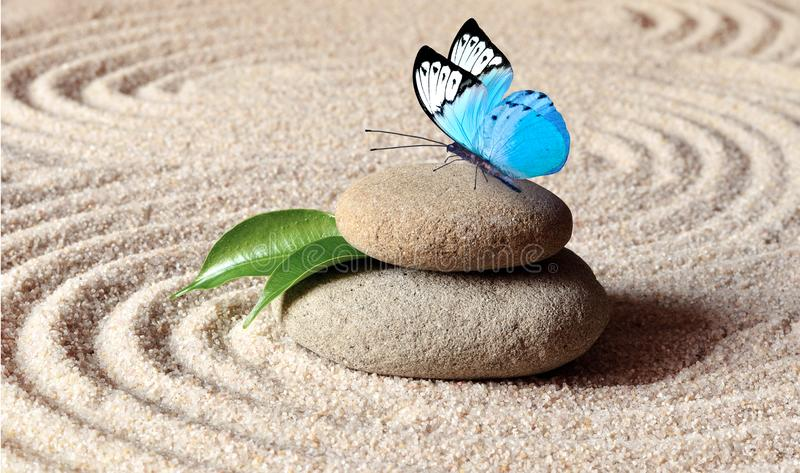 A blue vivid butterfly on a zen stone with circle patterns in the grain sand. royalty free stock image
