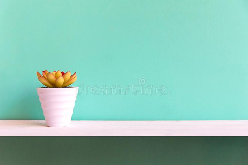 Blue wall with cactus on shelf white wood, copy space for text. Still life Concept royalty free stock photo