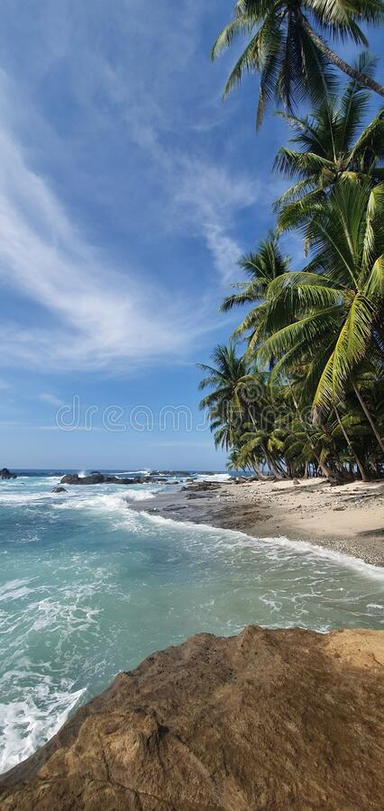 Blue water and amazing palmtrees. Beach deserted stock photos