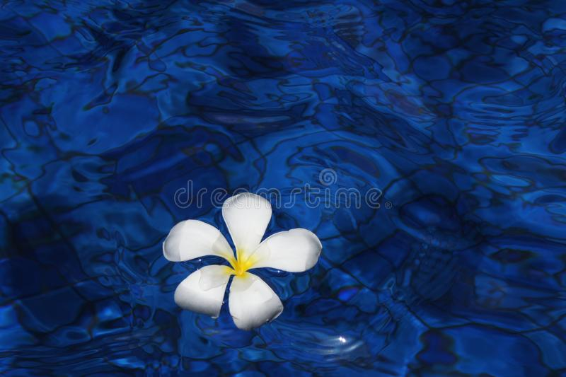 Blue, Water, Flower, Petal stock photo