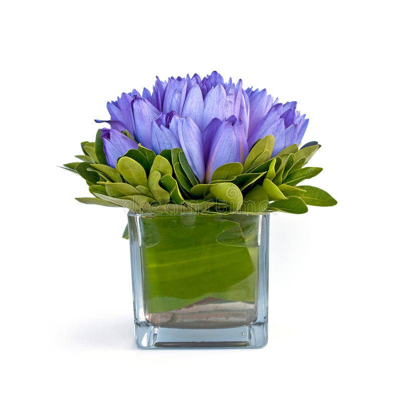 Blue water lilies in a vase, isolated on white. Background royalty free stock images