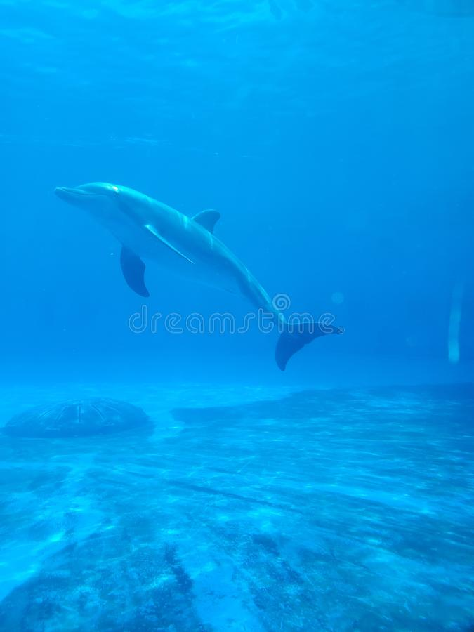 In blue water peacefully. Beautiful dolphin in stock photo