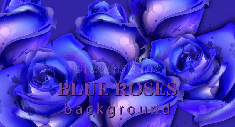 Blue watercolor roses background Vector. Beautiful floral texture decors royalty free illustration