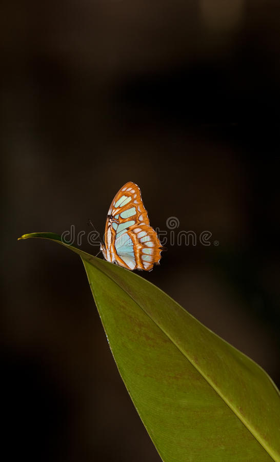 Blue Wave Butterfly royalty free stock images