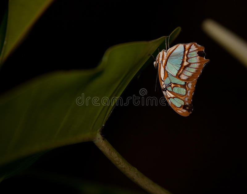 Blue Wave Butterfly royalty free stock photos