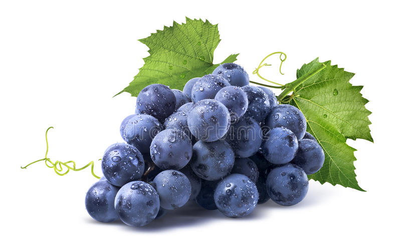 Blue wet grapes bunch on white background royalty free stock images