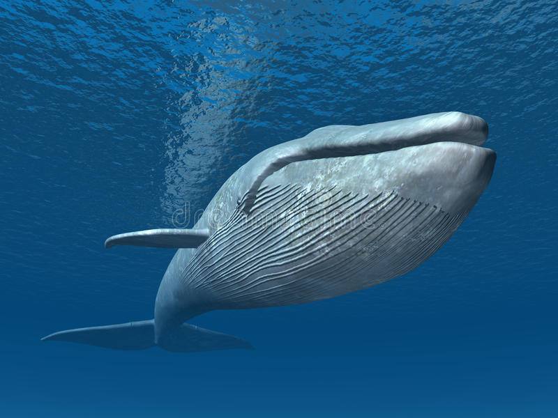 Blue Whale. Computer generated 3D illustration with a Blue Whale
