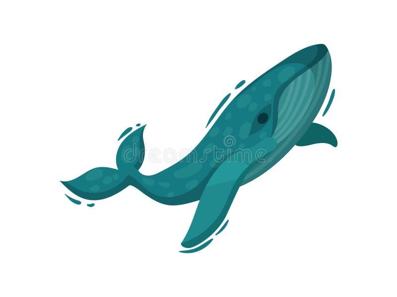 Striped blue whale. Vector illustration on white background. vector illustration